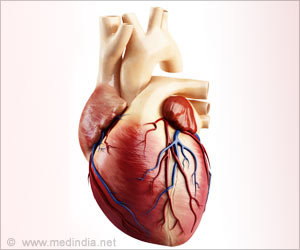 Phenomenon Behind the Lack of Reproduction in Human Cardiac Muscle Cells Decoded