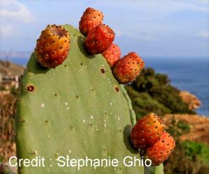 Mediterranean Plants Contain Compounds That Treats Alzheimer's, Parkinson's Disease