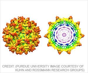 New Insights Detail Immature Zika Virus Structure