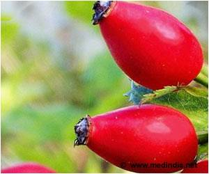 Rose Hip Could Help Reduce Risk of Heart Disease