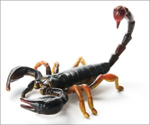 Australian Scorpion Venom Could be Potential Painkiller, Say Researchers