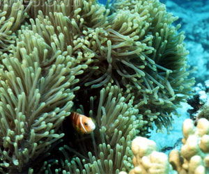 Indonesia's Corals' New Life Sparked by Electricity