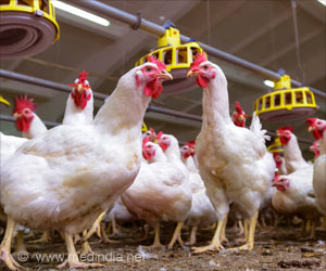 Chickens can Protect You from Mosquito-Borne Diseases