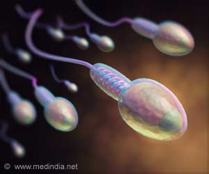 Novel Mechanism for Sperm Stem Cell Number Control identified