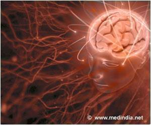 Brain Size Does Not Influence Higher Intelligence: University Of Vienna