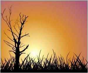 Sunstroke-related Deaths Rise to 37 in Odisha