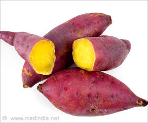 Sweet Potato Naturally 'Genetically Modified' Due To The Presence Of Agrobacterium