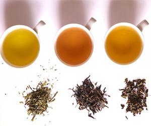 Shifting Precipitation Patterns Affect Tea Flavor and Health Compounds