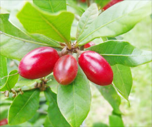 Insights into the Flowering and Fruiting Behaviors of Miracle Fruit