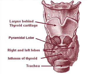 New Clinical Guidelines for Thyroid Disease Management