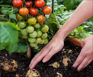 Tomato Seedling Growth can be Improved by Vermicompost Leachate