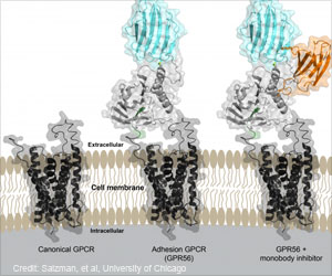 Scientist Describe Protein Structure for Targeting New Treatment Options