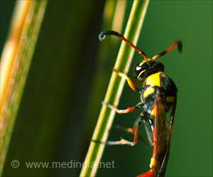 Venom of Wasp - Potential Treatment for Parkinson's Disease