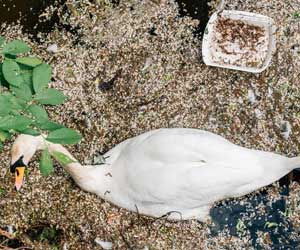 Dangerous Chemicals in Plastics Threaten Seabirds