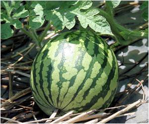 Grafted Watermelon Plants Absorb Extra Pesticides