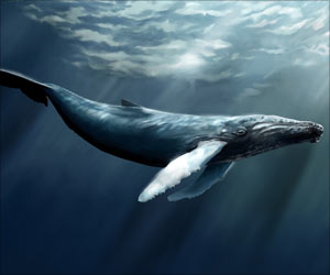 Study Shows How Deep-Diving Whales Create Synthetic Blood