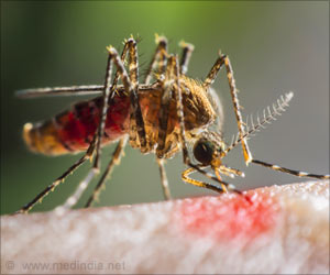 Expert Studies Traits of Mosquitoes That Spreads Zika Virus