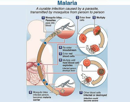 Infographics on Malaria - Waterborne