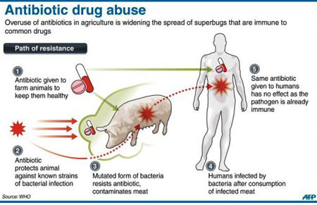 Antibiotic Drug Abuse