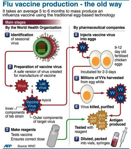 Swine Flu Vaccine - Infographic