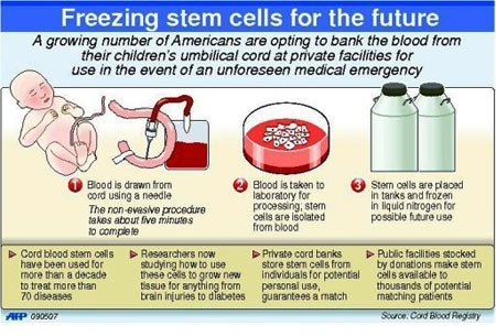 Freezing Stem Cells For The Future