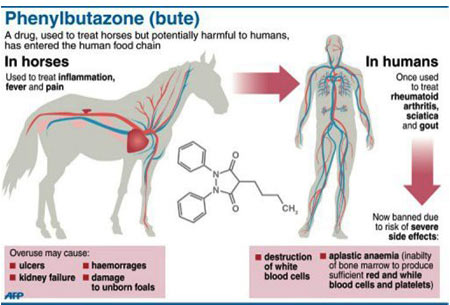 Phenylbutazone (bute)