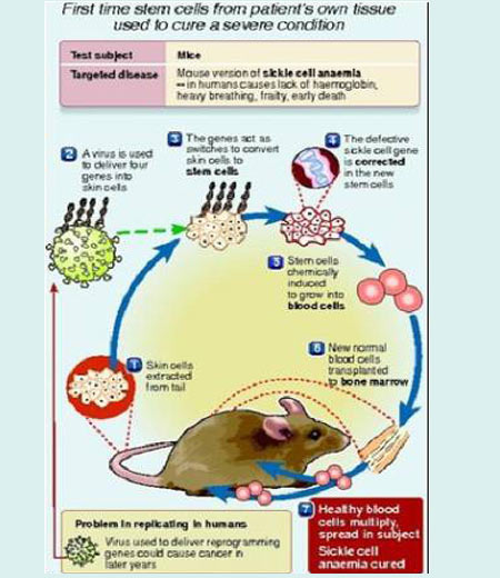 Infographics on Stem Cells -  Fundamentals