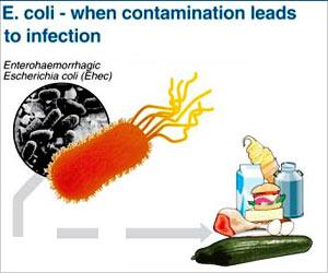 E.coli - Infection