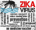 Top 10 Facts on Zika Virus