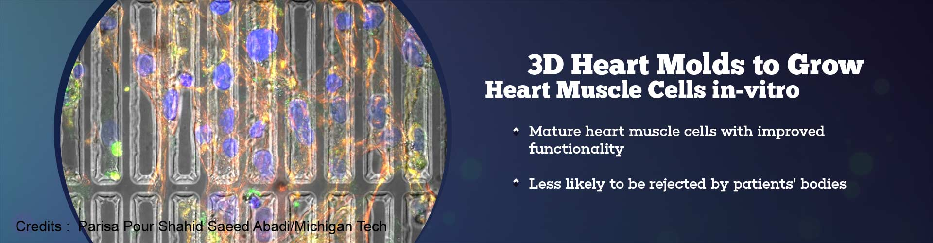 3D Heart Molds to Grow Heart Muscle Cells In-vitro
