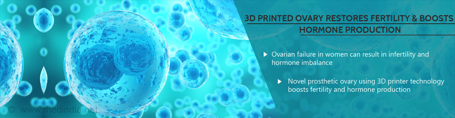 Breakthrough 3D Printed Ovary Restores Fertility, Boosts Hormone Production