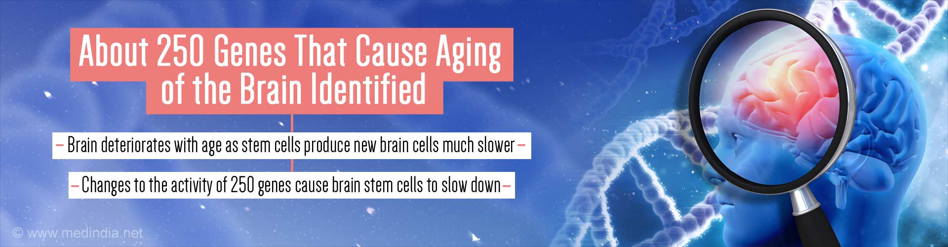 about 250 genes that cause aging of the brain identified - brain deteriorates with age as stem cells produce new brain cells much slower - changes to the activity of 250 genes cause brani stem cells to slow down