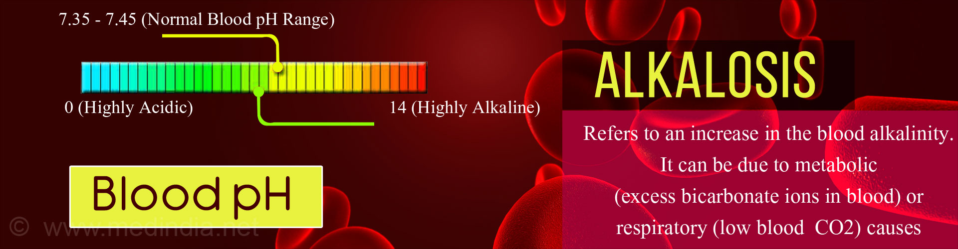 Alkalosis refers to an increase in the blood alkalinity. It can be due to metabolic (excess bicarbonate ions in blood) or respiratory (low blood CO2) causes. 7.35-7.45 (normal blood pH range) 0 (highly acidic) 14 (highly alkaline)