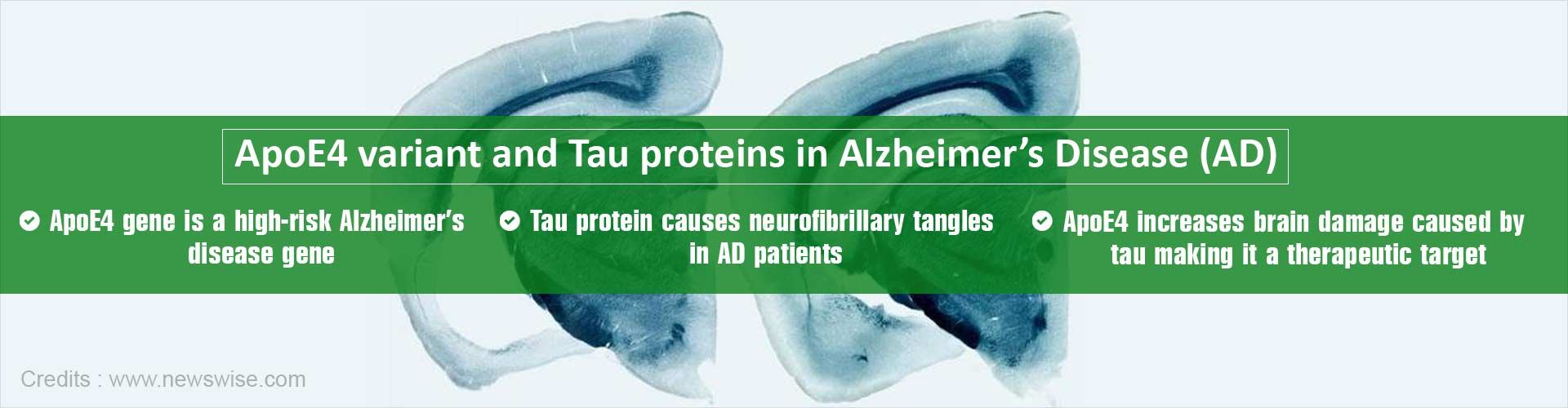 New Role of Apolipoprotein E4 Variant in Alzheimers Disease