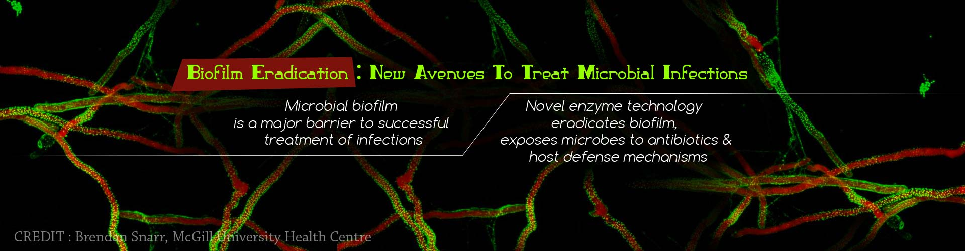 Biofilm Eradication: New avenues to treat microbial infections - Microbial biofilm is a major barrier to successful treatment of infections - Novel enzyme technology eradicated biofilm, exposes microbes to antibiotics & host defense mechanisms