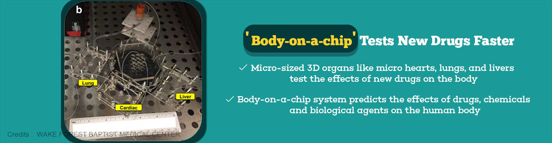 Body-on-a-chip Helps in Testing New Drugs Quickly