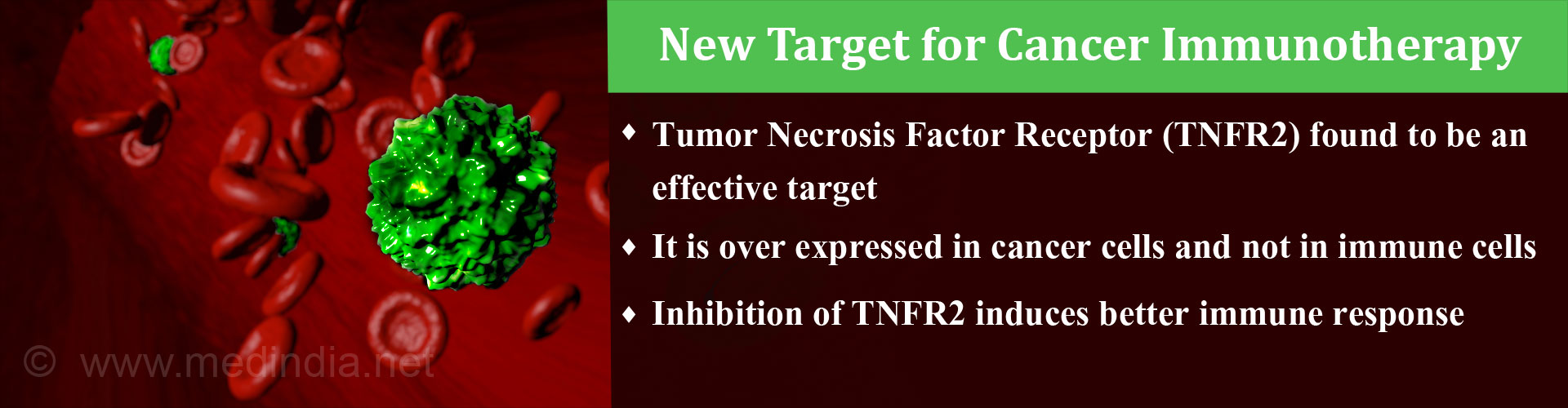 New Target for Cancer Immunotherapy Identified