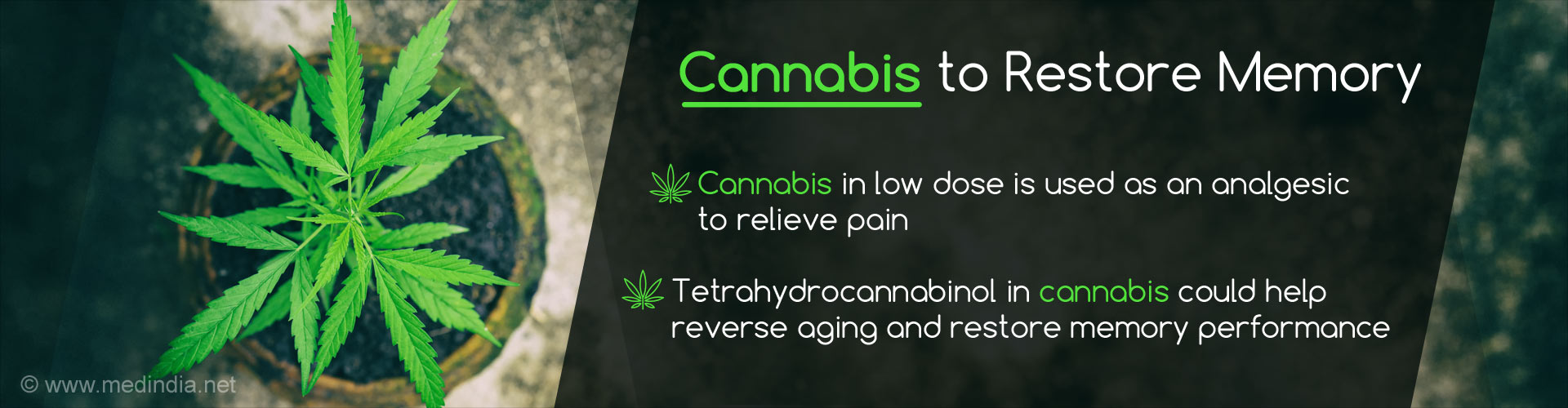 Cannabis to restore memory - Cannabis in low dose is used as an analgesic to relieve pain - Tetrahydrocannabinol in cannabis could help reverse aging and restore memory performance