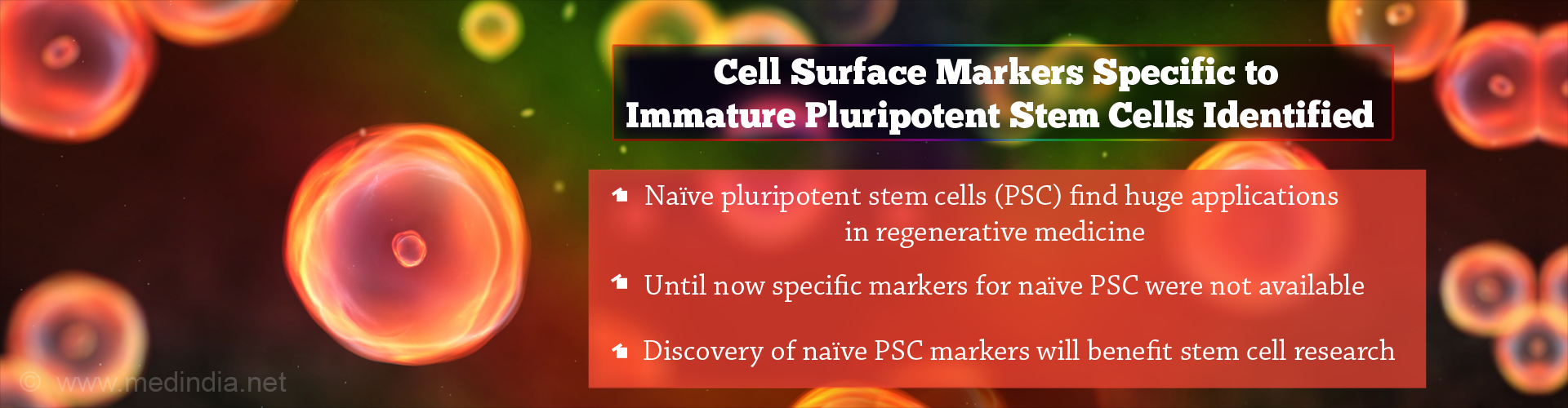 Cell Surface Markers Specific to Immature Pluripotent Stem Cells Identified