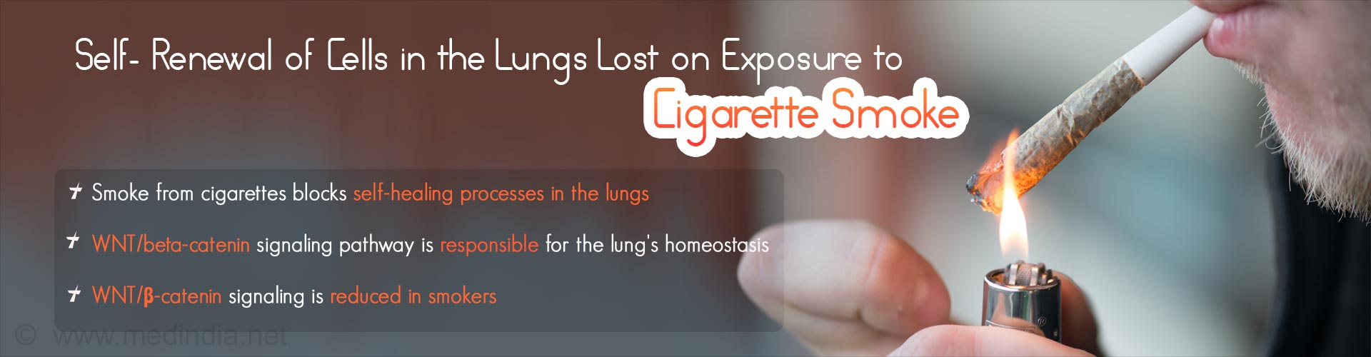 Cigarette Smoke Reduces Self-Healing Capacity of Lungs