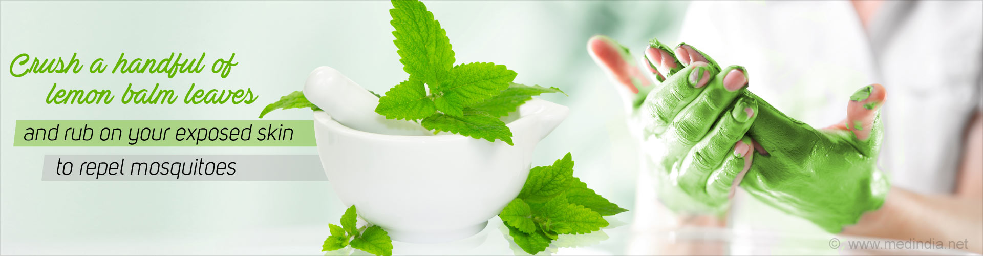 Crush a handful of lemon balm leaves and rub on your exposed skin to repel mosquitoes