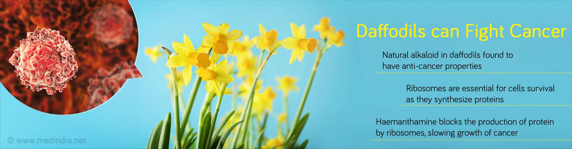 Daffodils can Fight Cancer