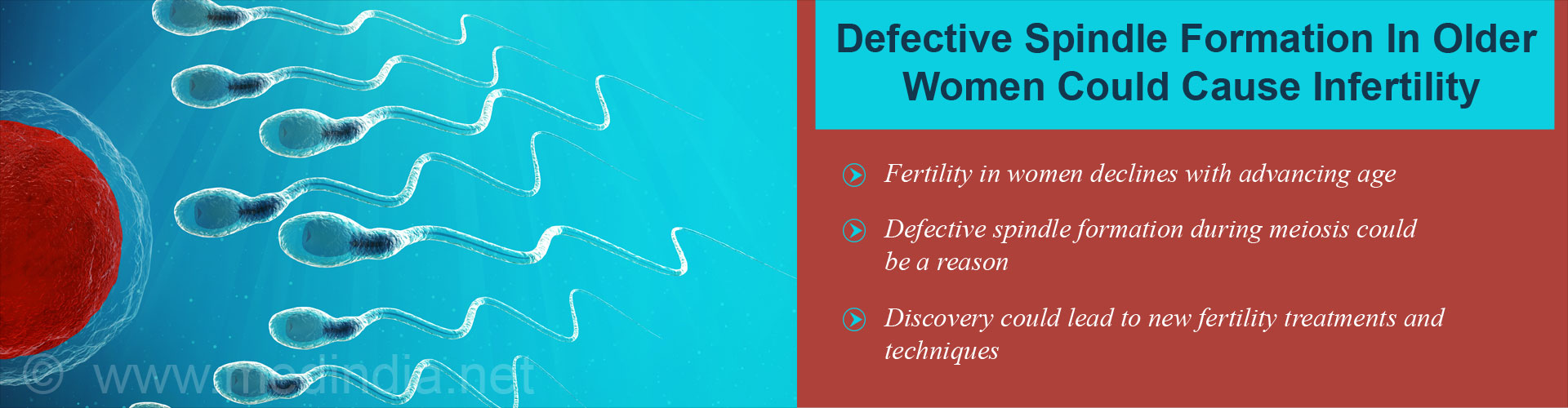 Why Does Infertility Increase in Older Women?