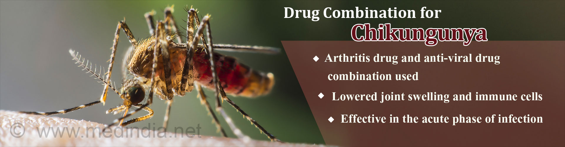 Drug Combination for Chikungunya - Arthritis drug and anti-viral drug combination used - Lowered joint swelling and immune cells - Effective in the acute phase of infection