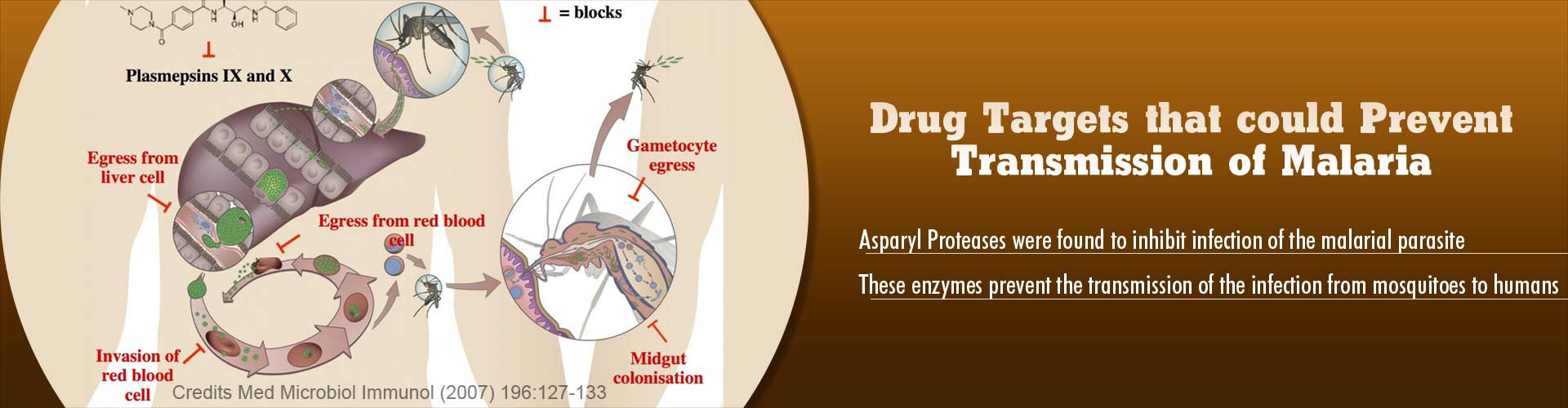 Drug Targets To Fight Disease Resistant Malaria
