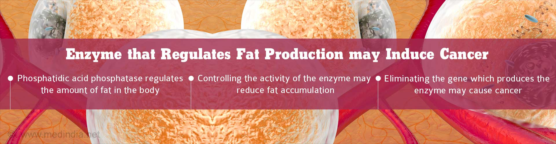 Enzyme that regulates fat production may induce cancer