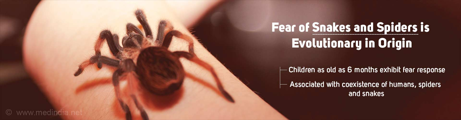 Fear for Spiders and Snakes Evolutionary, Shows Study