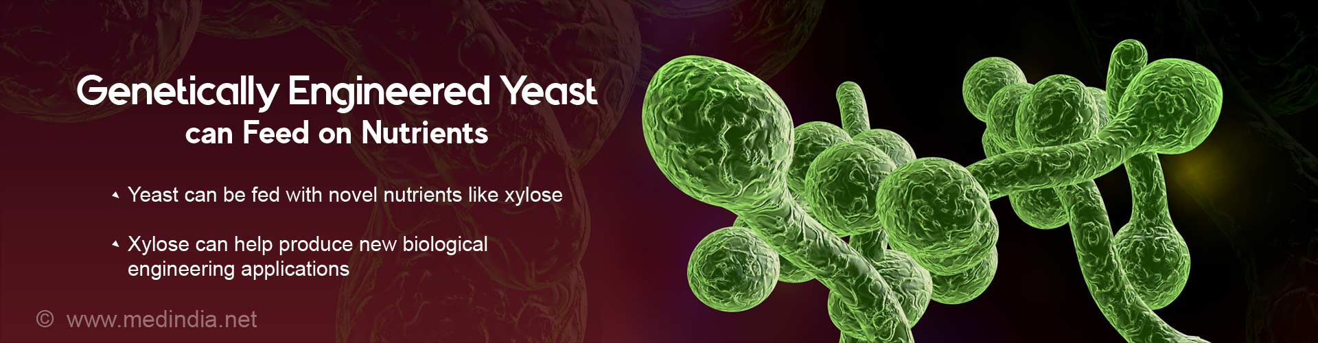 genetically engineered yeast can feed on nutrients
