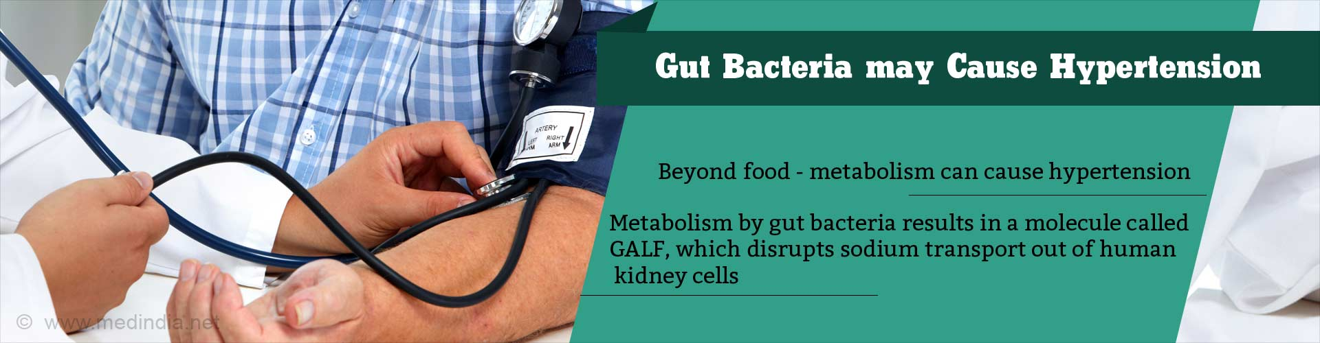 Hypertension is Caused by Gut Bacteria Metabolism