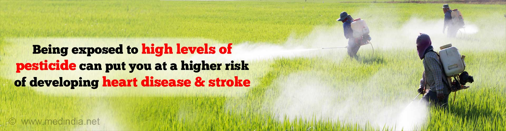 Being exposed to high levels of pesticide can put you at a higher risk of developing heart disease and stroke.